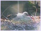 Stamboliiski-Stork`s Nest Webcam